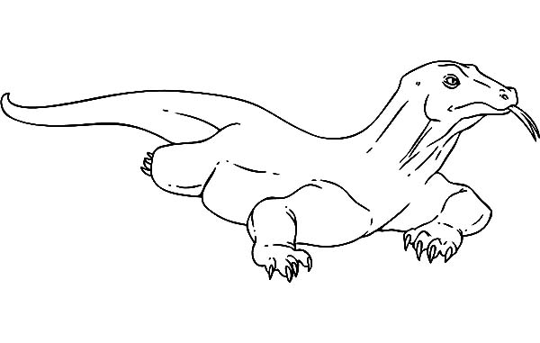 Drawing Komodo Dragon Coloring Pages Download Print Online