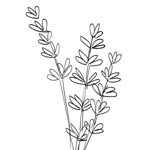 Drawing Lavender Flower Coloring Pages