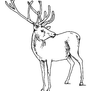 Elk Checking Situations Coloring Pages