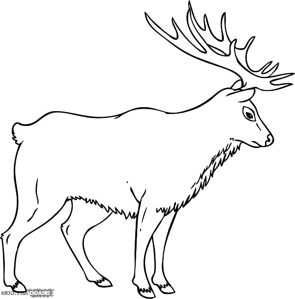 Elk Coloring Pages Download Print Online Coloring Pages