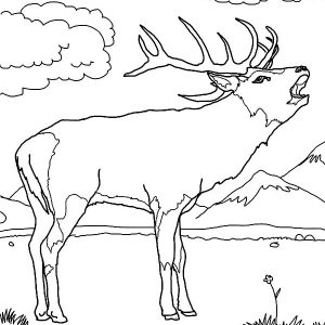 Elk Hunting For Its Antlers Coloring Pages