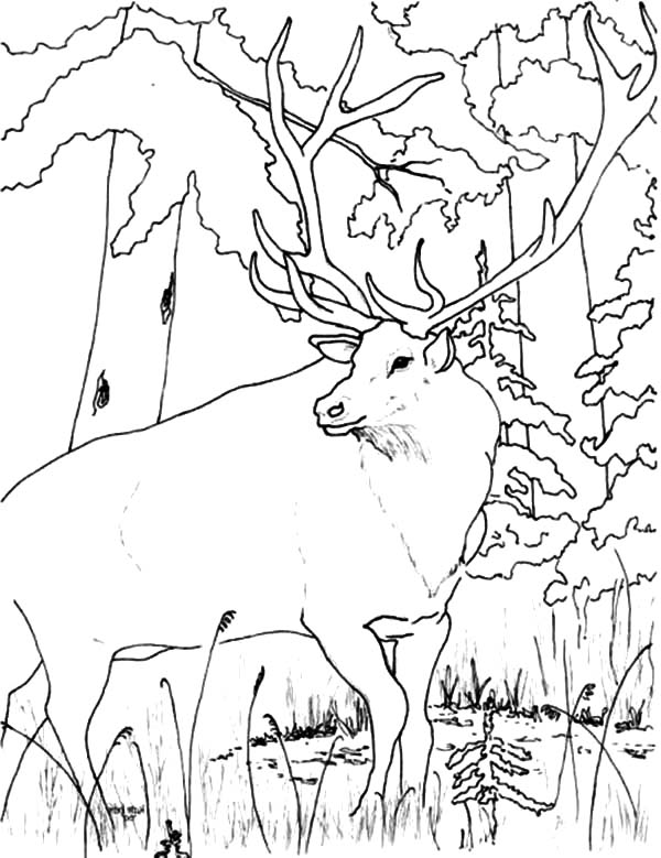 Young Elk Coloring Pages - Download & Print Online Coloring Pages ... | 779x600