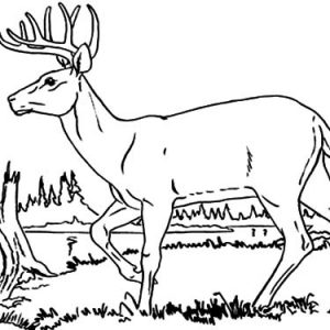Elk Walking By The Lakeside Coloring Pages