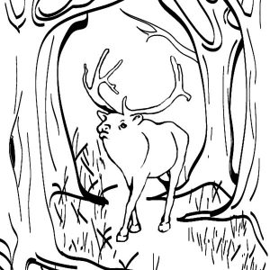 Elk Is Lost From Its Group Coloring Pages