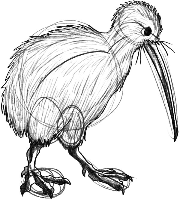 How To Draw Kiwi Bird Coloring Pages Download Print Online