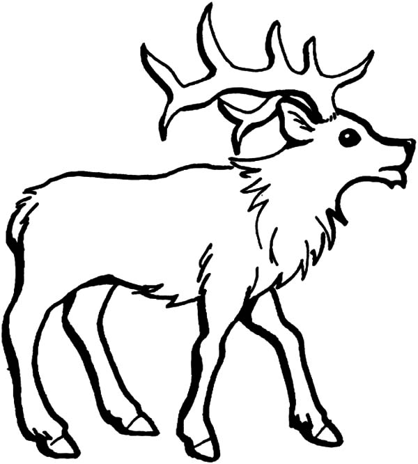How To Draw An Elk Coloring Pages Download Print Online