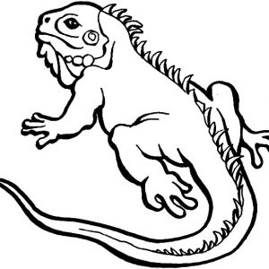 Iguana Lizard Coloring Pages