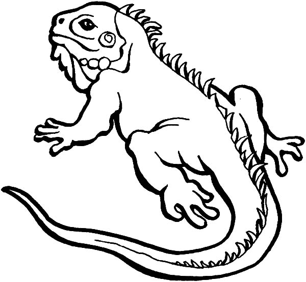 cartoon lizard coloring pages - photo#30