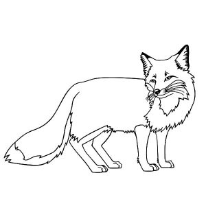 Kit Fox Coloring Pages