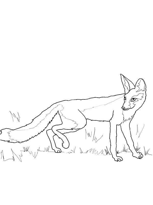 Kit Fox Hiding Behind Grass Coloring Pages Download Print Online