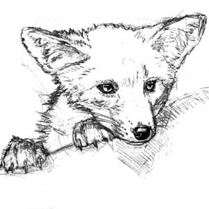 Kit Fox Sneaking Around Coloring Pages