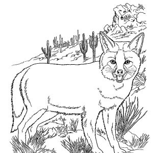 Kit Fox Standing On Mountain Side Coloring Pages
