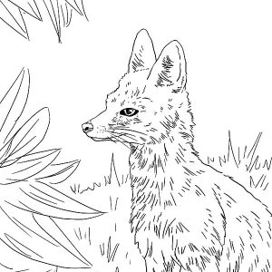 Kit Fox In The Jungle Coloring Pages