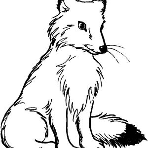 Kit Fox Is Sitting Coloring Pages