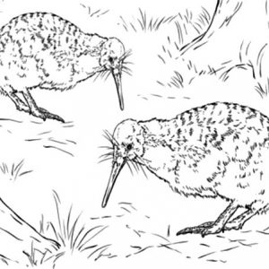 Kiwi Bird Couple Finding Food Coloring Pages