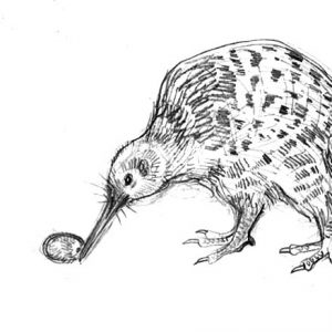 Kiwi Bird Lay Egg Coloring Pages