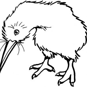 Kiwi Bird Look Sad Coloring Pages