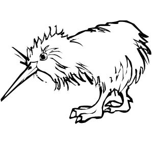 Kiwi Bird Wet Hair Coloring Pages