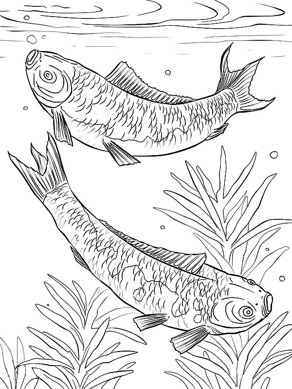 Pond Life Coloring Page | Coloring pages, Pond life theme, Pond ... | 800x600