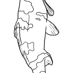 Koi Fish Pattern Coloring Pages