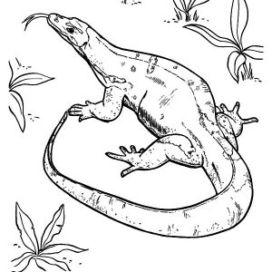 Komodo Dragon Lizard Coloring Pages
