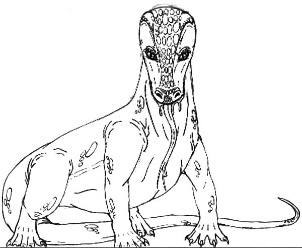 Komodo Dragon Looks Like A Snake Coloring Pages