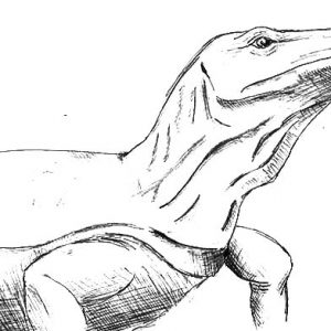Komodo Dragon Sketch Coloring Pages