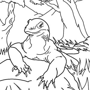 Komodo Dragon Taking Rest Coloring Pages