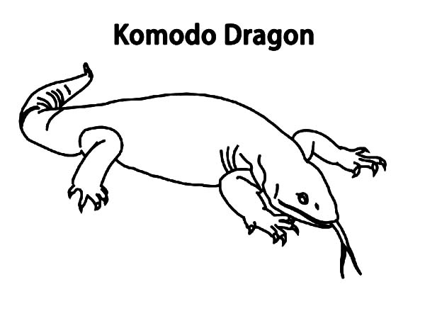 Komodo Dragon From Komodo Island Indonesia Coloring Pages