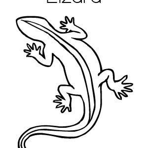 L Is For Lizard Coloring Pages