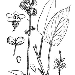 Lavender Flower Part By Part Coloring Pages