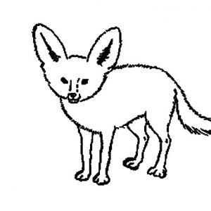 Little Kit Fox Coloring Pages