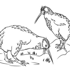 Little Spotted Kiwi Bird Coloring Pages