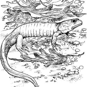 Lizard Camouflage Among Dry Leaves Coloring Pages