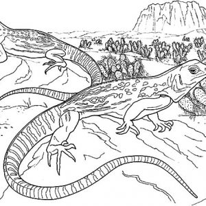 Lizard Mating Coloring Pages