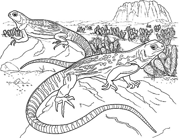 13 lizard coloring pages printable - Print Color Craft | 447x600