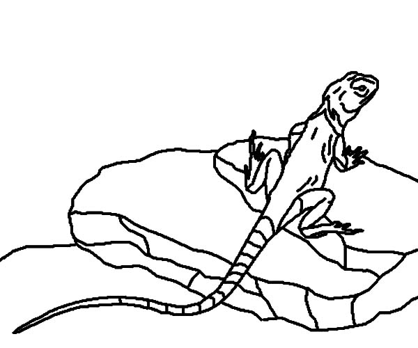 Puffin Rock Coloring Pages to Print | Free Coloring Books | 500x600