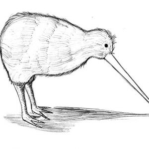 Long Beak Kiwi Bird Coloring Pages