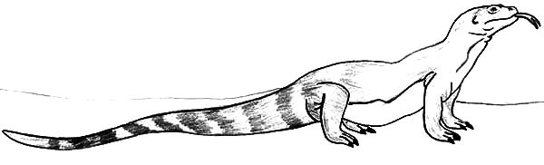 komodo dragon coloring pages Long Tailed Komodo Dragon Coloring Pages   Download & Print Online  komodo dragon coloring pages
