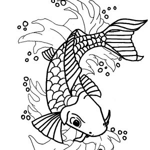 Nishikigoi Koi Fish Coloring Pages