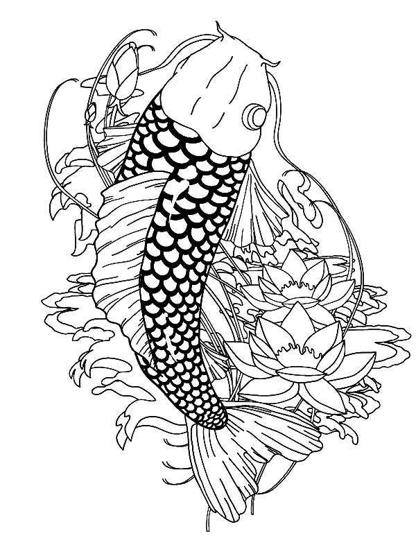 Paradise Koi Fish Coloring Pages - Download & Print Online ...