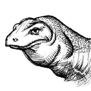 Realistic Picture Of Komodo Dragon Coloring Pages