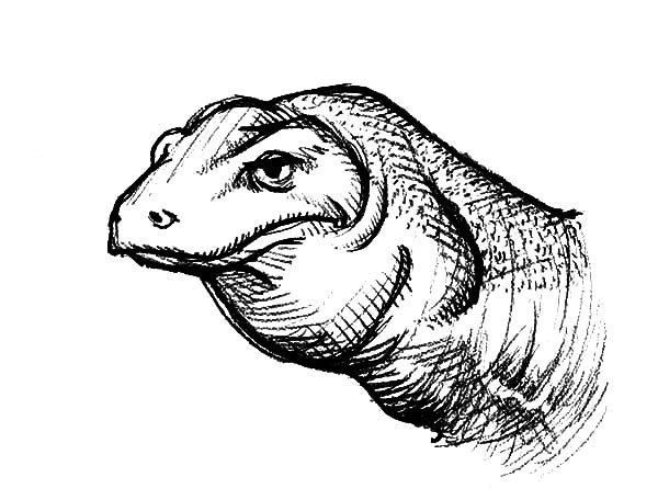 Realistic Picture Of Komodo Dragon