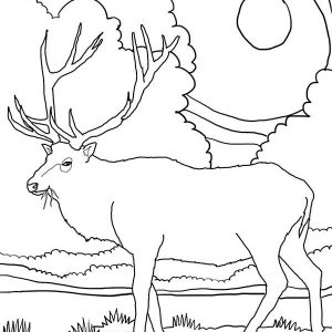 Rocky Mountain Elk Coloring Pages