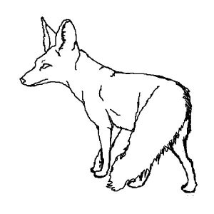 San Joaquin Kit Fox Coloring Pages