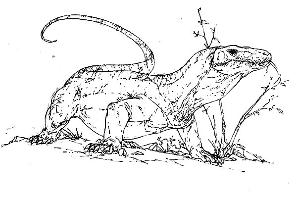 Scary Komodo Dragon Coloring Pages Download Print Online