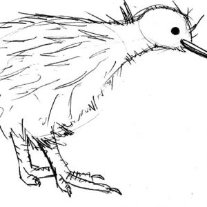 Sketch Of Kiwi Bird Coloring Pages