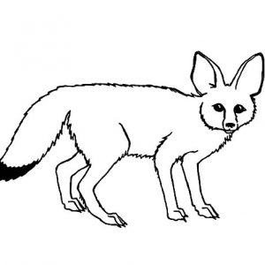 Southern California Kit Fox Coloring Pages