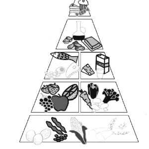 The Right Arrangement Of Food On The Pyramid Coloring Pages