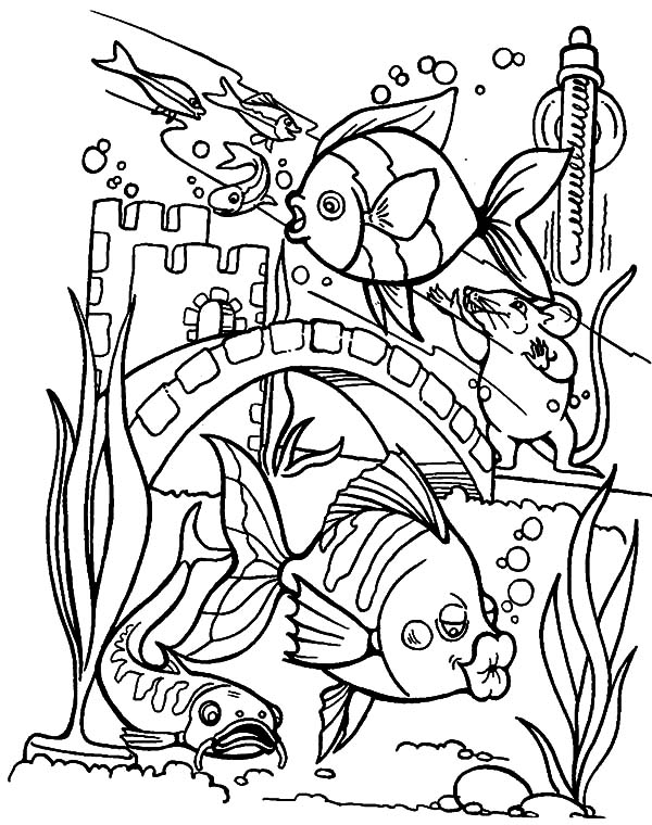 Tropical Fish Kissing Aquarium Glass Wall Coloring Pages Download